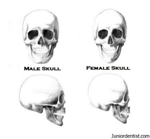 male skull vs female skull