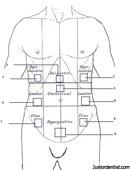 Abdominal Regions Rh Juniordentist Com Quadrants Abdominopelvic Diagram