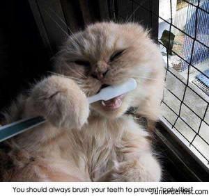 Brush your teeth always to prevent Cat-vities