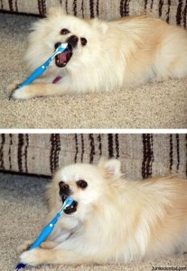 Dog brushing teeth