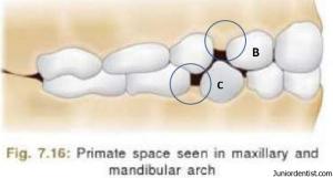 Primate spaces