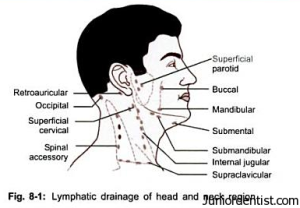 Lymphatic Drainage of Head and Neck Region