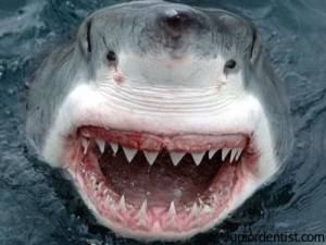 shark teeth have the best caries protection
