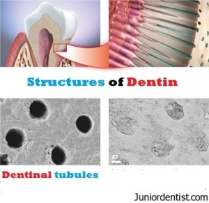 structures in dentin