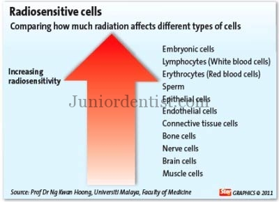 Radiosensitivity of cells organs and structures of human body
