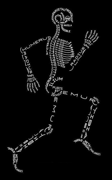 List Of Bones Of The Body Or Skeleton