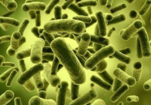 Bacteria in Dental caries seen to Aggrevate Colorectal cancer