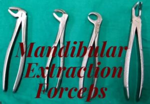Mandibular Extraction Forceps